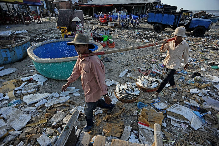 Buổi sớm ở bến cá Phước Hải